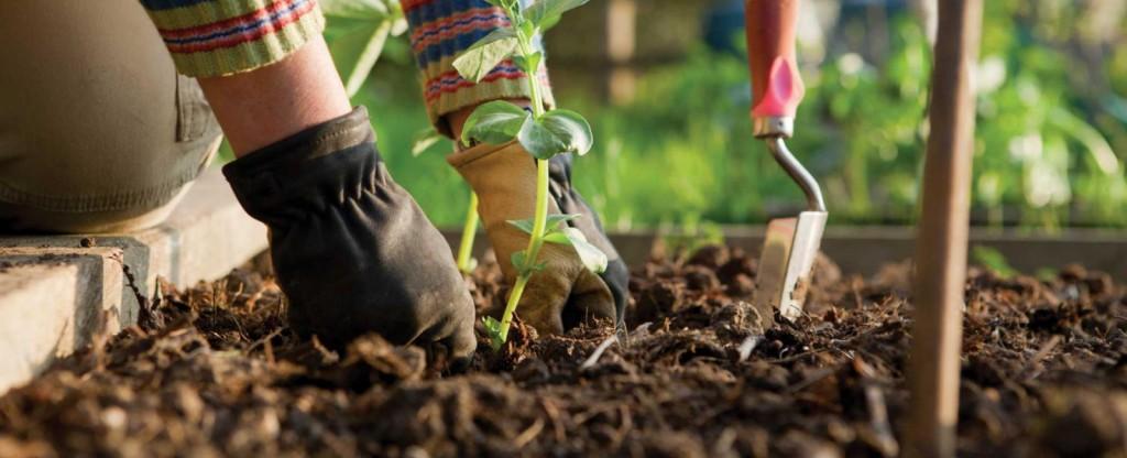 Plantation Avril