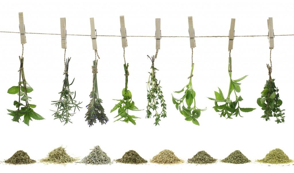 Au comptoir du jardinier vous propose un guide d'utilisation des aromatiques.
